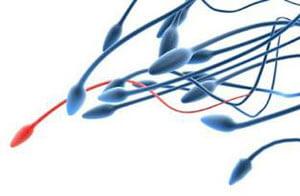 Sperm Freezing and Storage